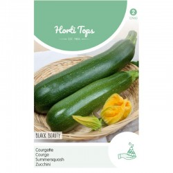 HT Courgette Black Beauty