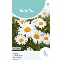 HT Chrysanthemum, Margriet May Queen